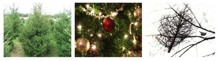 Mi történik a karácsonyfával?