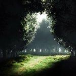 sötétség - világosság