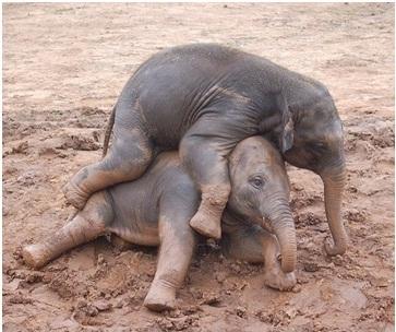jatek-elefantkolykok