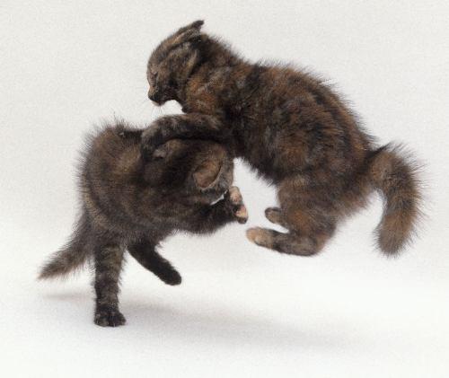 jatek-kismacska-harc